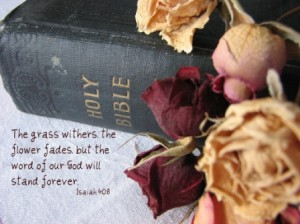bible_roses